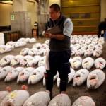 Tsukiji Fish Market in Tokyo.
